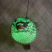 Extra Large Puffer Fish Lamp Green 2